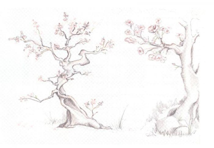 Рисунки карандашом сакура дерево